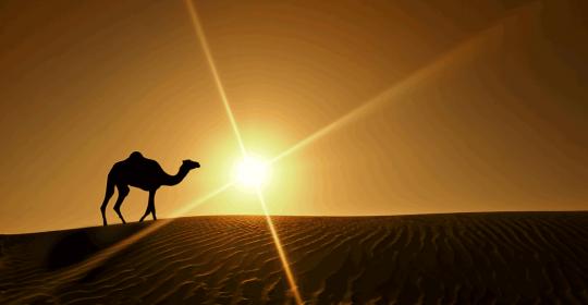Multiple Sclerosis in UAE | Too Less Sun?