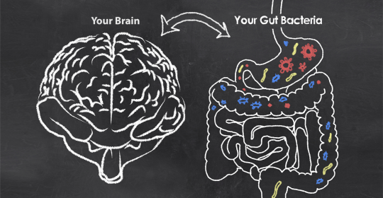 Gut Microbiome Is Causing Dangerous Malformations Of Blood Vessels In The Brain
